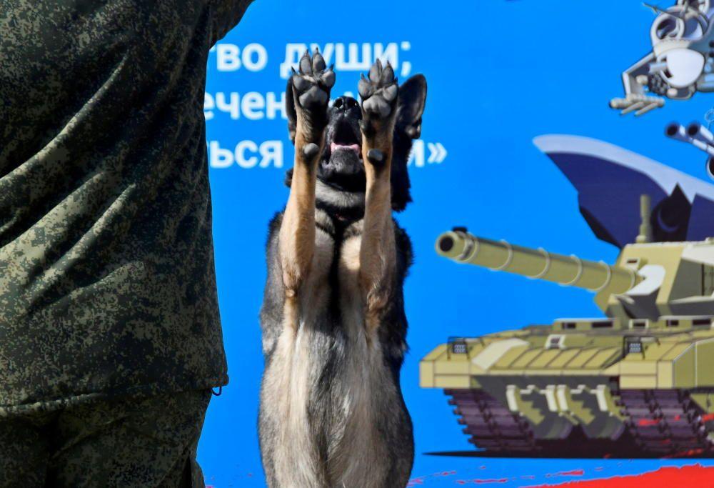 Entrenador y perro patrulla en Rusia.