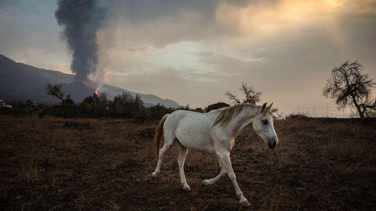 Un caballo de una finca de Tacande de Abajo, en La Palma.