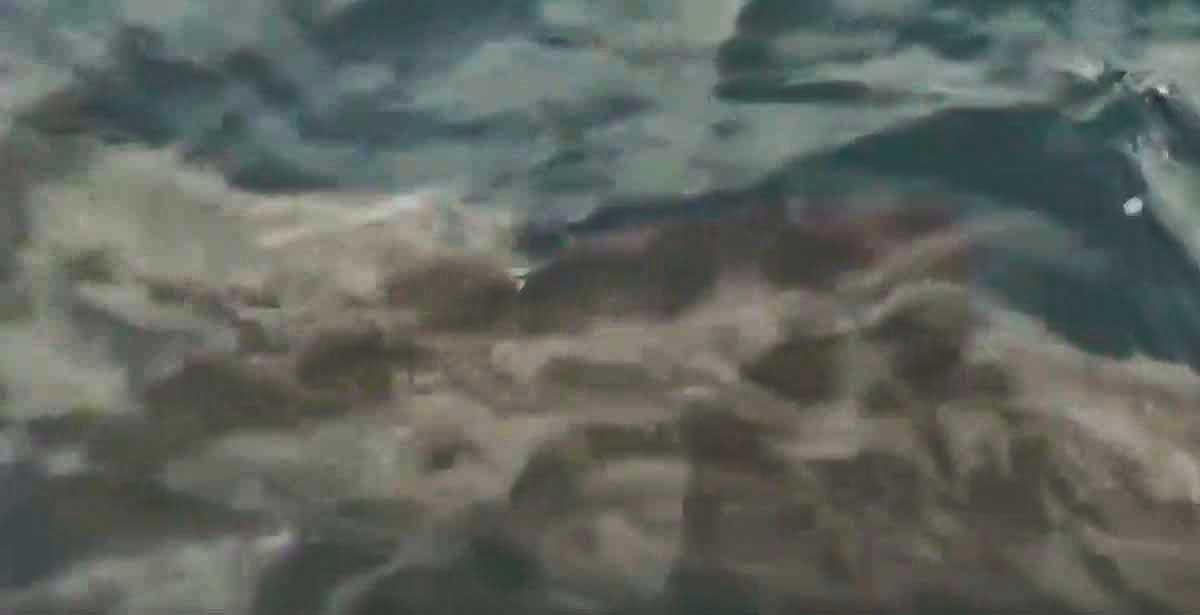 La sorprendente visita de un tiburón a la ría de Vigo