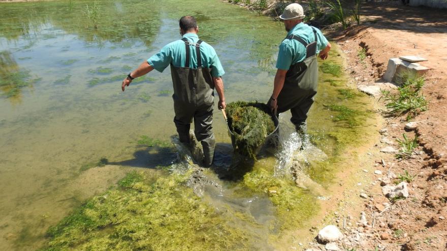 Cuidar de ecosistemas como el Clot de Galvany para garantizar la salud de los habitantes