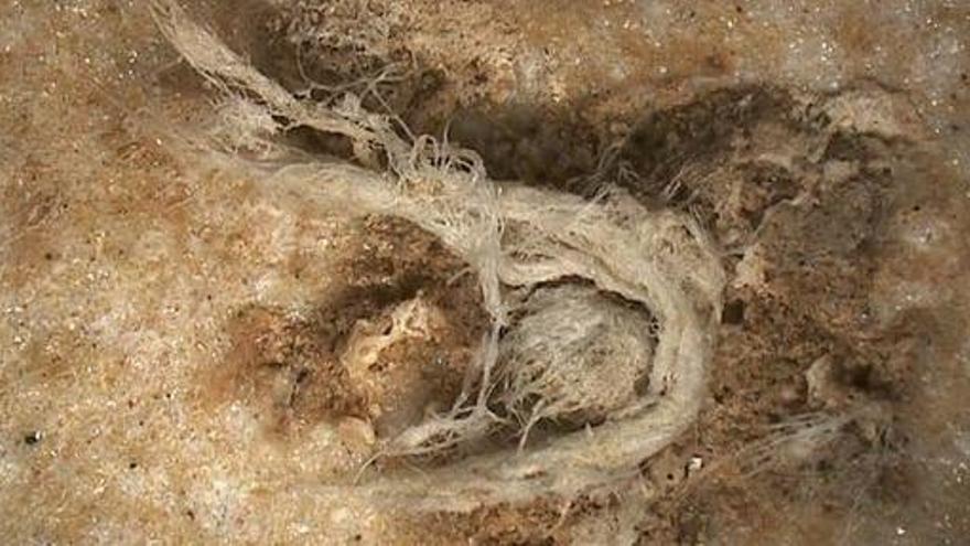 Los neandertales eran tan avanzados tecnológicamente como el homo sapiens