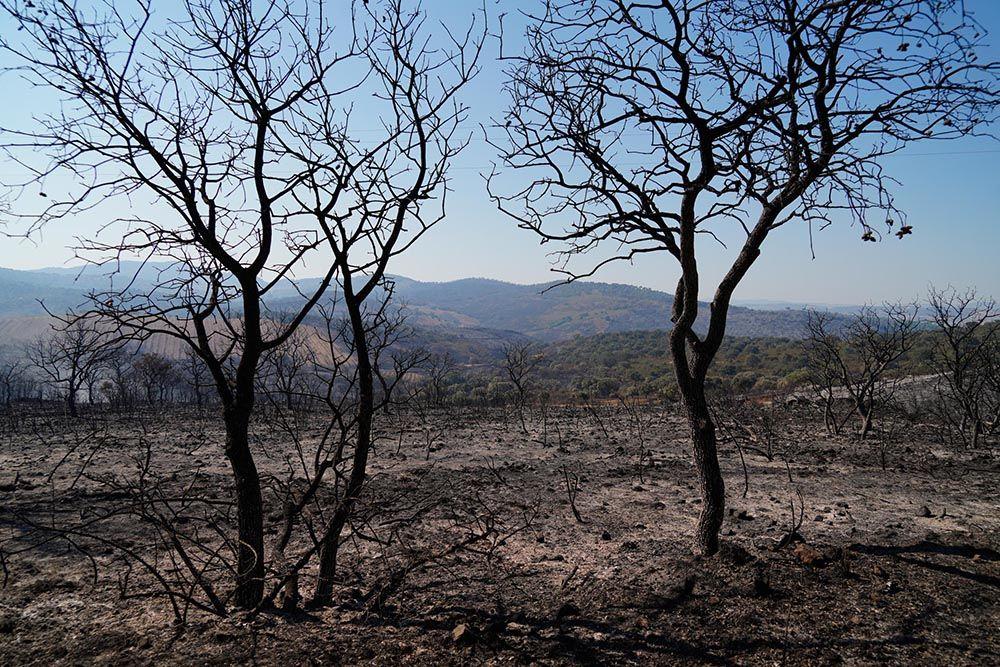 El incendio del Calatraveño arrasa zonas de gran valor ambiental