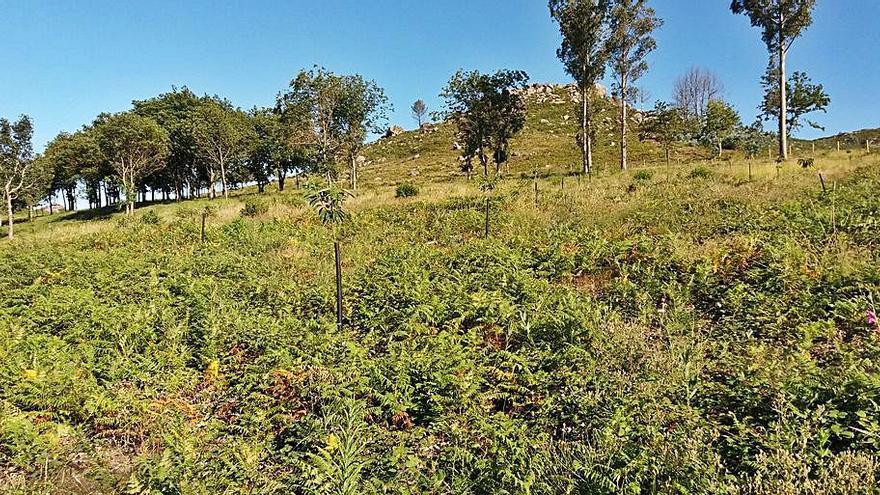La Comunidad de Montes de Zamáns le planta cara al CO2