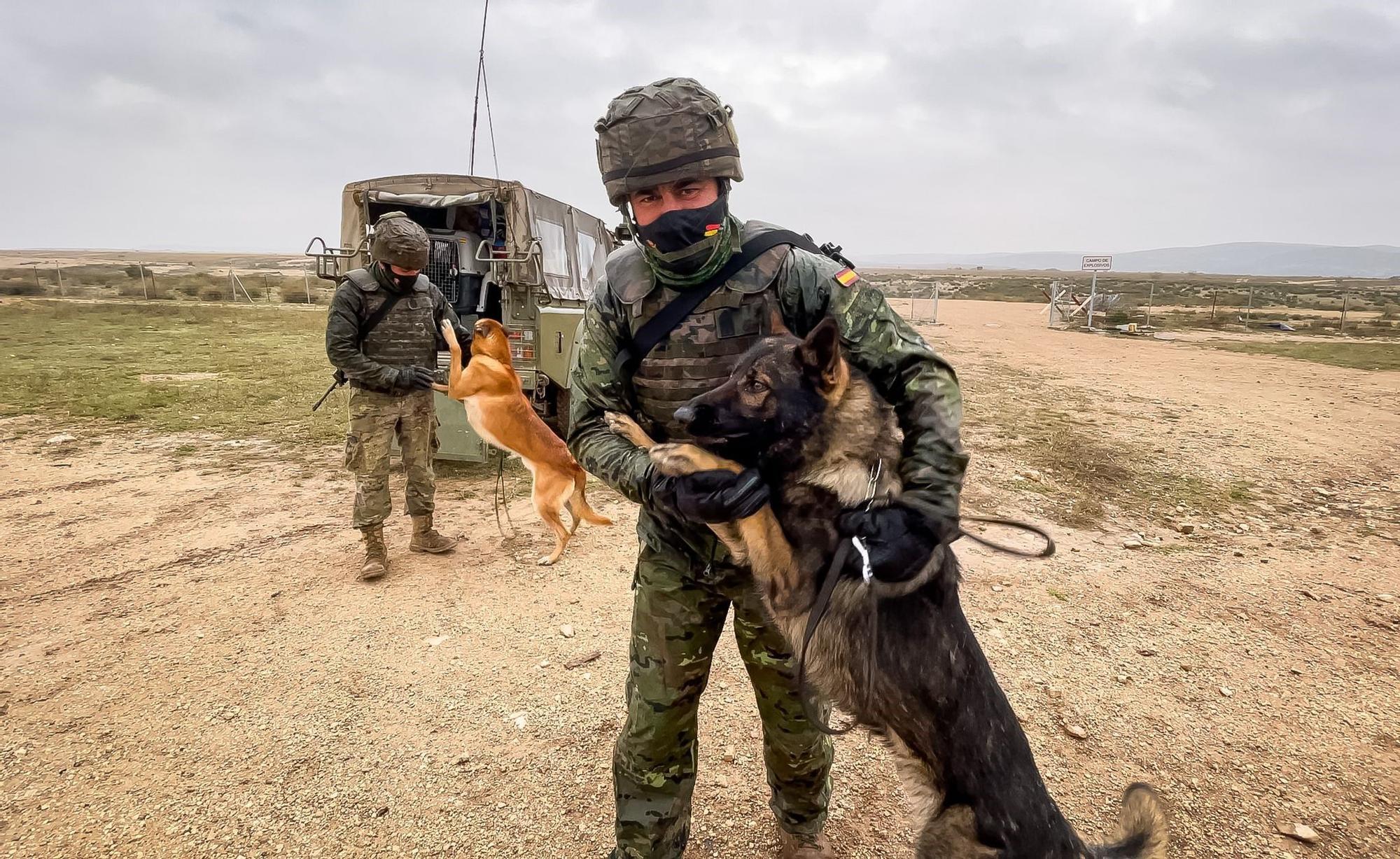 """La Brigada """"Canarias"""" XVI, de ejercicio en el campo de maniobras más grande de Europa"""