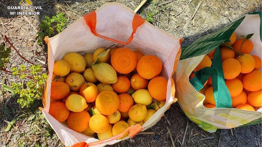 """Lo pillan robando naranjas y dice que """"el fruto de los árboles es de todos"""""""