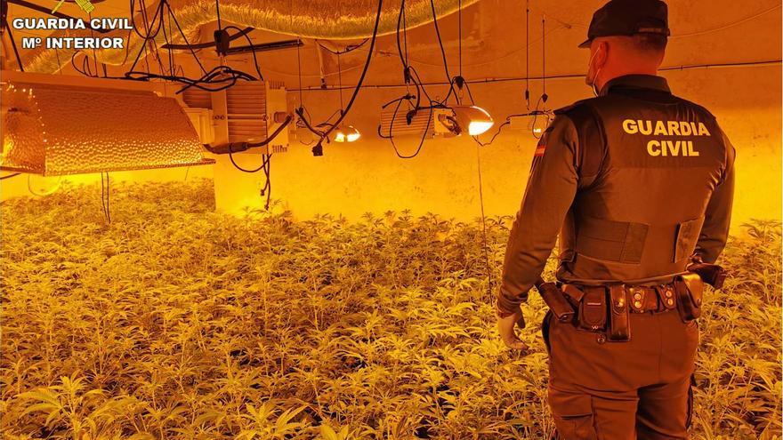 Intervienen mil plantas de marihuana en un chalé de Calp alquilado por 2.000 euros al mes