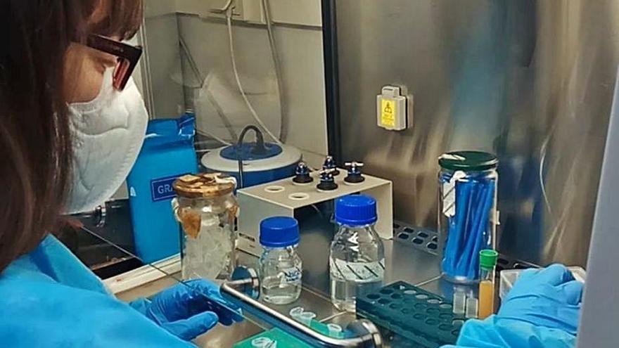 """Diseñan una técnica capaz de """"poner y quitar"""" bacterias en la flora intestinal"""