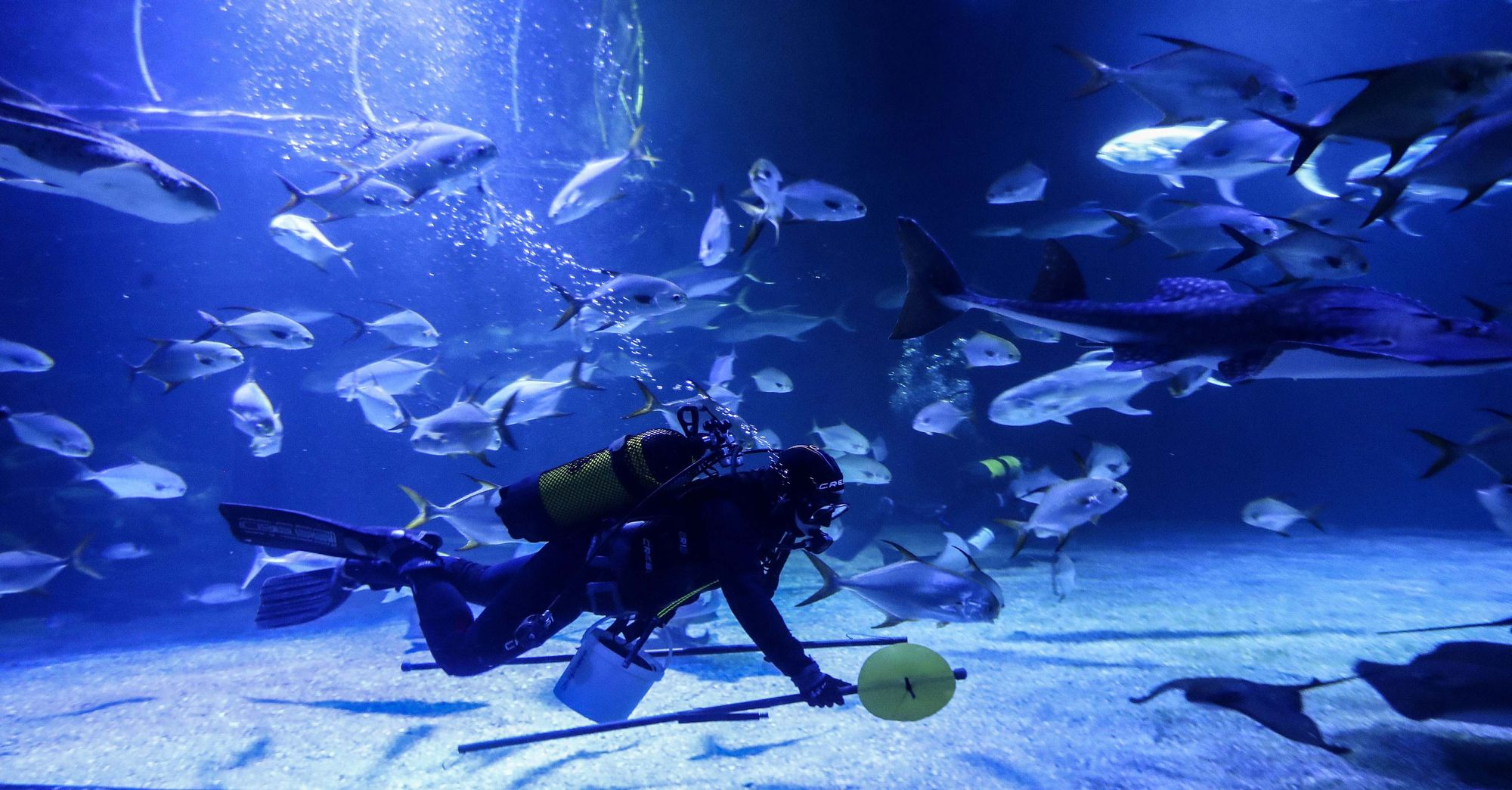 La cara oculta del acuario más grande de Europa. El Oceanogràfic