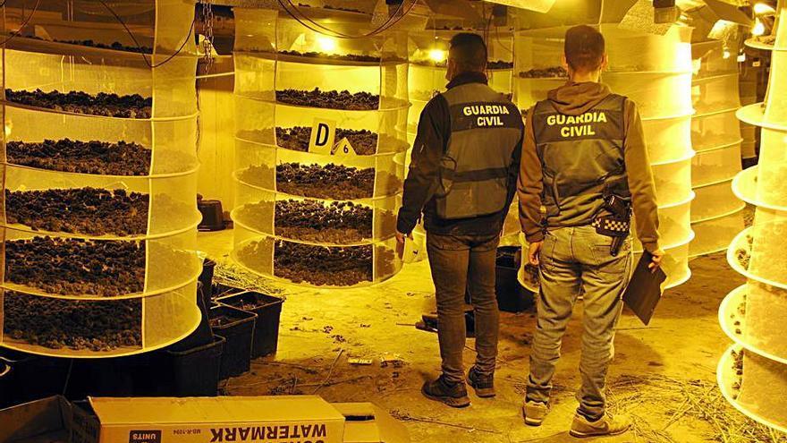 Siete detenidos en un operativo contra el cultivo de marihuana en Moixent