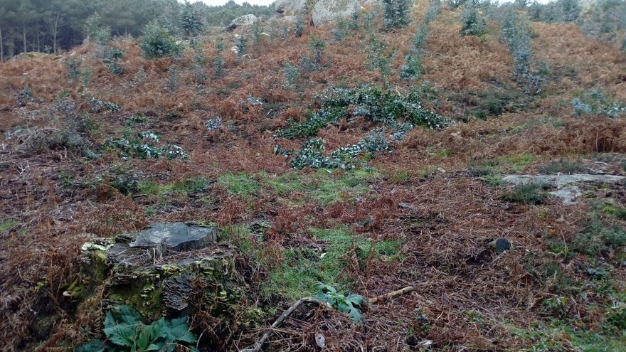 Vandalismo en los montes de Randufe