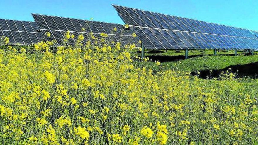 El papel de la ecovoltaica en el diseño de la economía rural del futuro