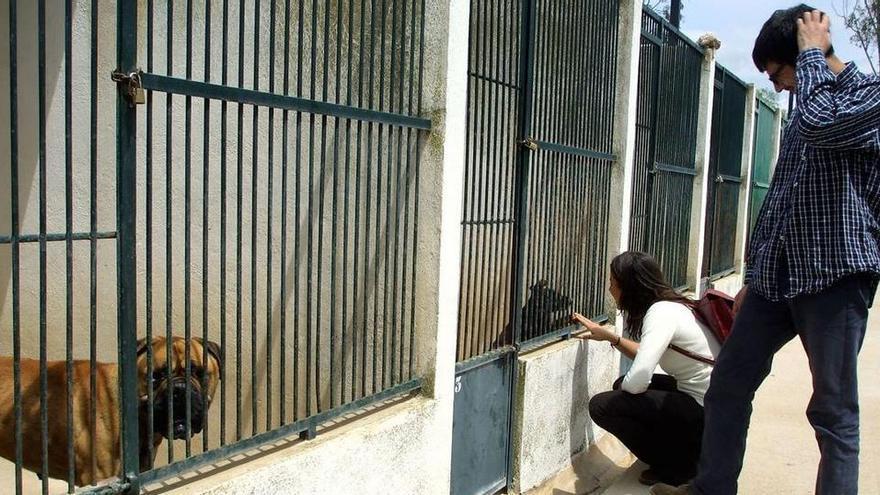 Im Pandemie-Jahr wurden auf Mallorca weniger Hunde ausgesetzt