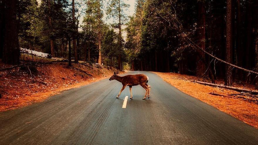 ¿Qué animales son los más atropellados de España?