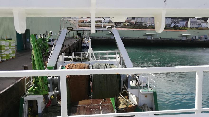 Cámaras a bordo para ver la interacción pesca-cetáceos