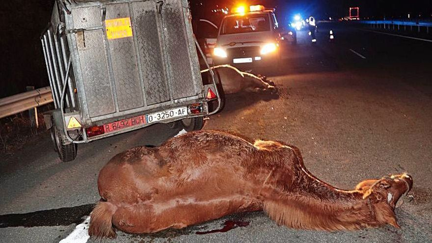 Impactante accidente en la A-66: un herido y dos caballos muertos