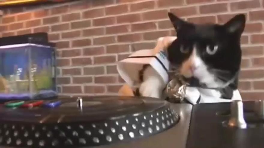 Así es el gato DJ que no deja dormir a sus vecinos