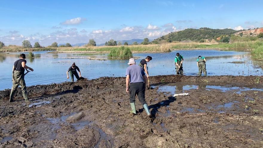 Restauren l'entorn natural de la Marjal d'Almenara