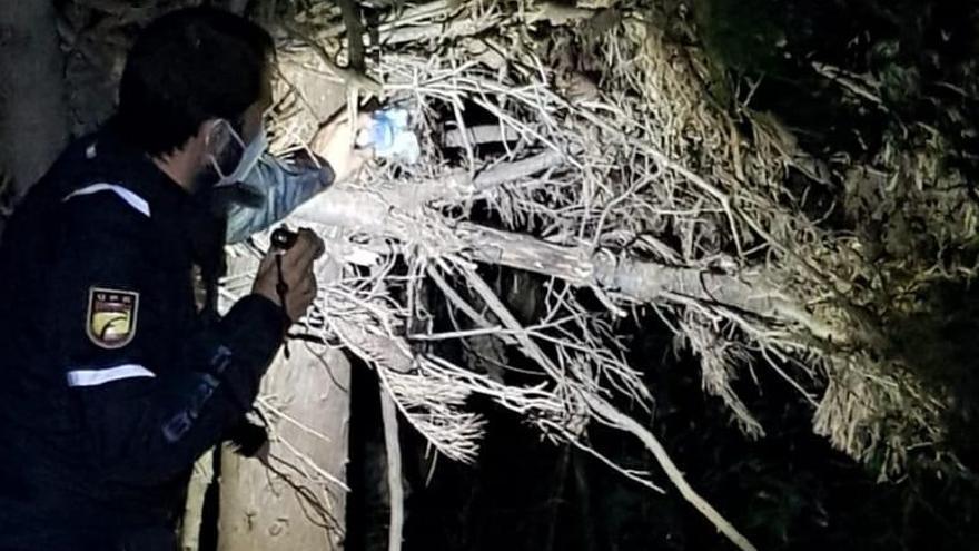 Detenido un joven por traficar con marihuana que escondía entre la maleza del parque Grande de Zaragoza