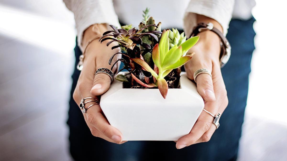 ¿Siempre se te mueren las plantas? Cuídalas con estos sencillos trucos