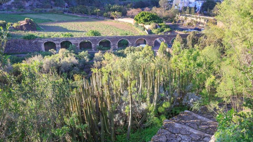 El Cabildo ofrece visitas guiadas al Jardín Botánico
