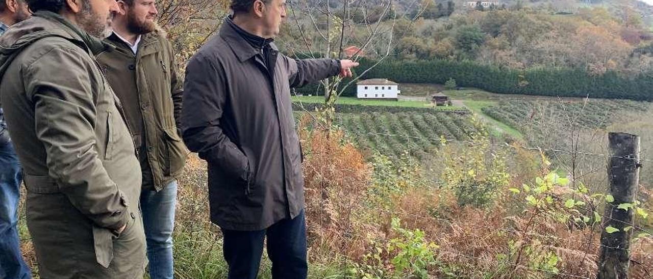Alejandro Calvo y el alcalde de Piloña, Iván Allende, visitando un cultivo en el concejo.