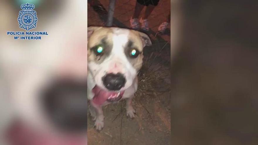 Prohíben a un hombre acercarse a su perro tras agredirlo a puñetazos