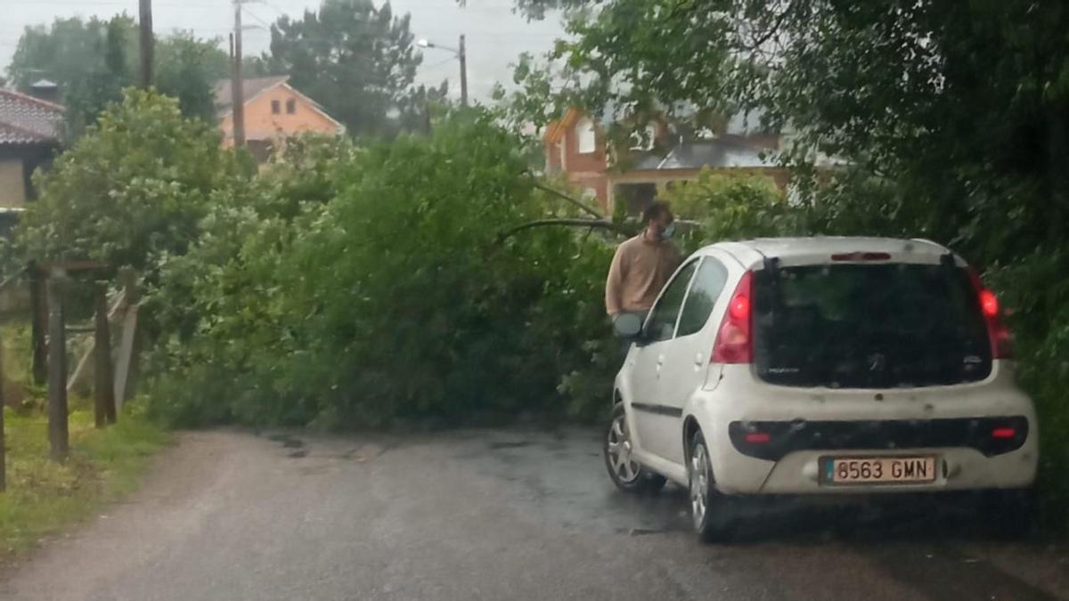 Árbol caído sobre la carretera a la piscina de Cangas