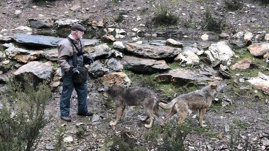 El reportero Jalis de la Serna elige el centro de Robledo de Sanabria como referencia geográfica del lobo ibérico