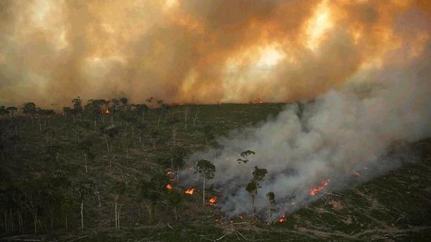 El 40% del Amazonas puede convertirse en un ecosistema tipo sabana