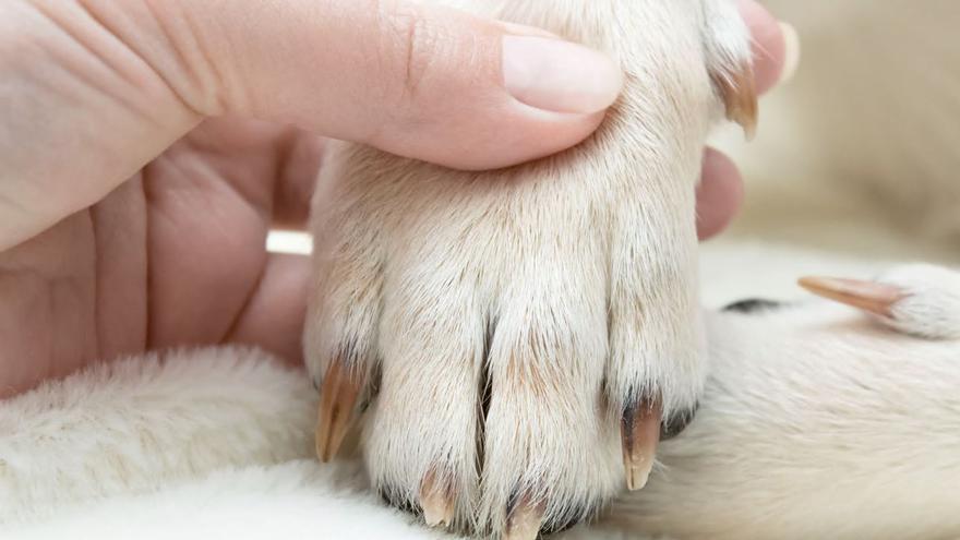 Cómo cortar las uñas a tu perro paso a paso