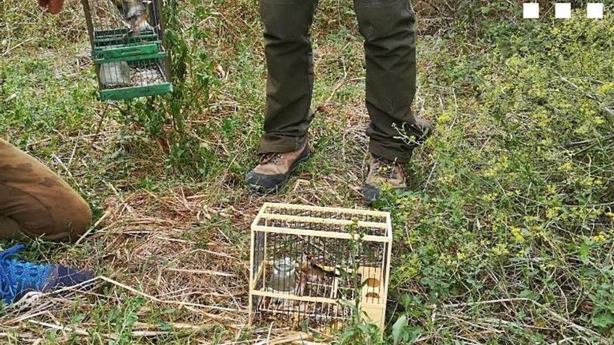 Mont-ras Denunciat per capturar ocells fringíl·lids