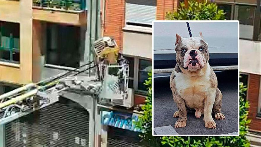 Los bomberos rescatan a un perro que llevaba días encerrado en un balcón