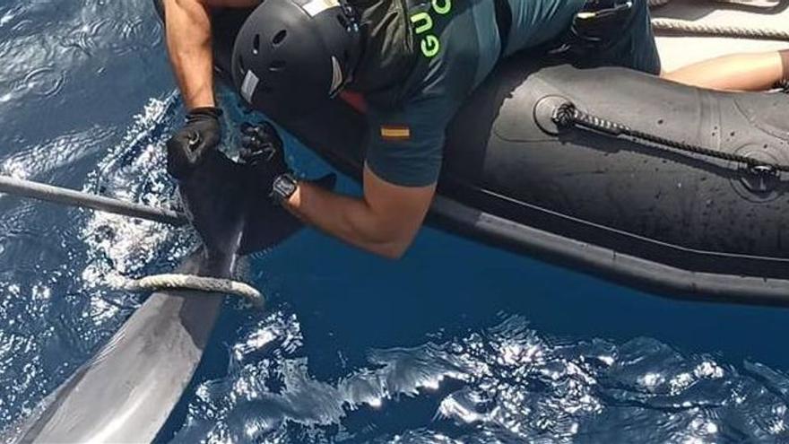 La Guardia Civil recupera un delfín sin vida en las costas de Elx