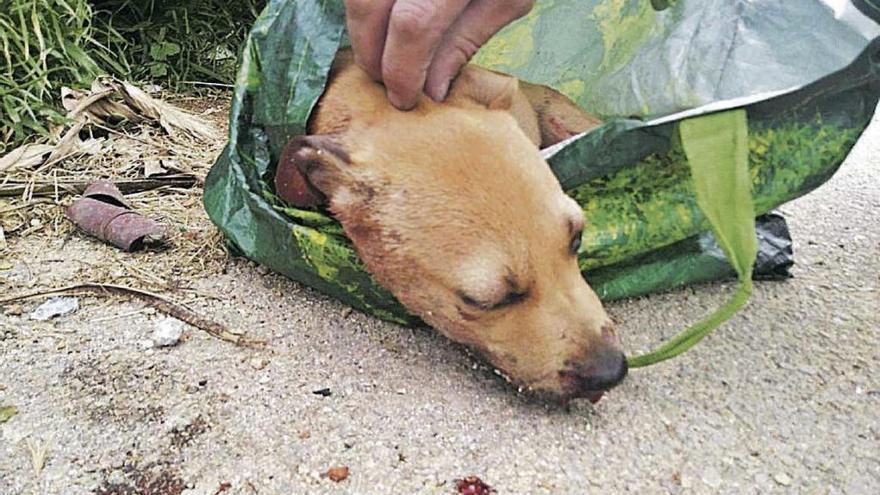Detenido un joven por dar una paliza a una perra y tirarla a un contenedor en Palma