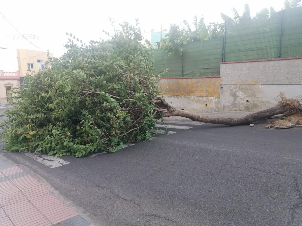 Efectos del viento en Telde