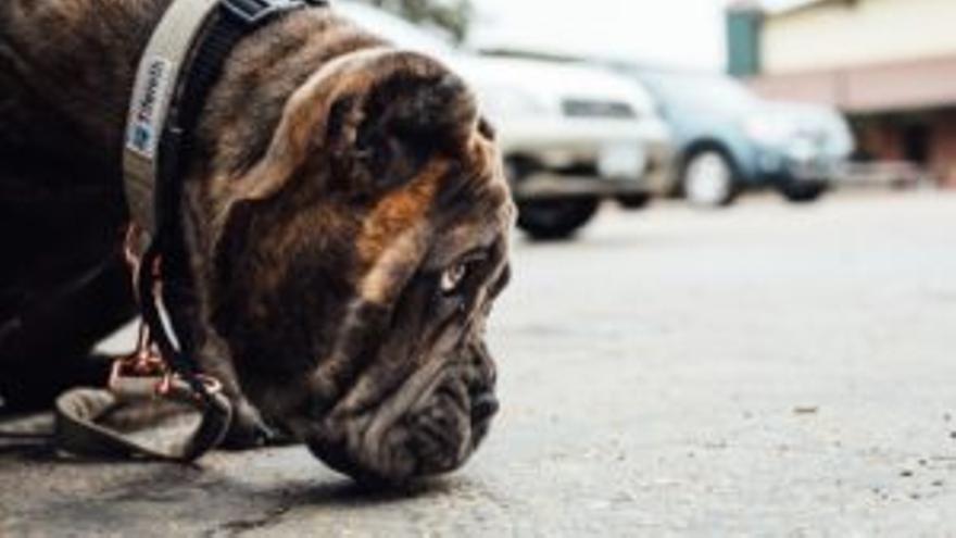 Benalmádena refuerza la vigilancia de la recogida de excrementos caninos en la calle