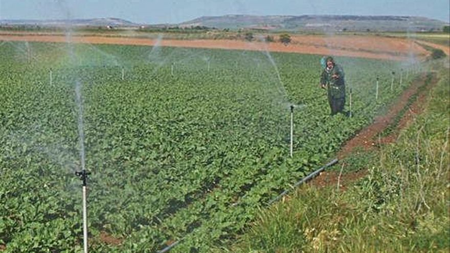 El Toro-Zamora analiza el agua de riego por la presencia de un posible protozoo