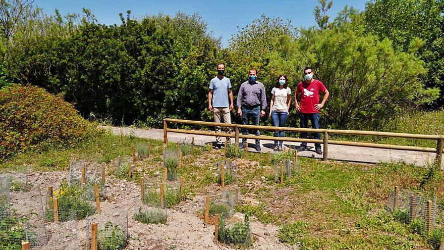 S'Albufera estrena un espacio con plantas para favorecer la presencia de polinizadores