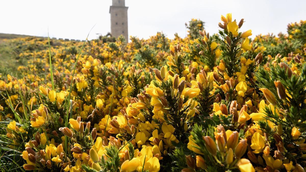 Vista de la Torre de Hércules, en A Coruña, un día soleado.