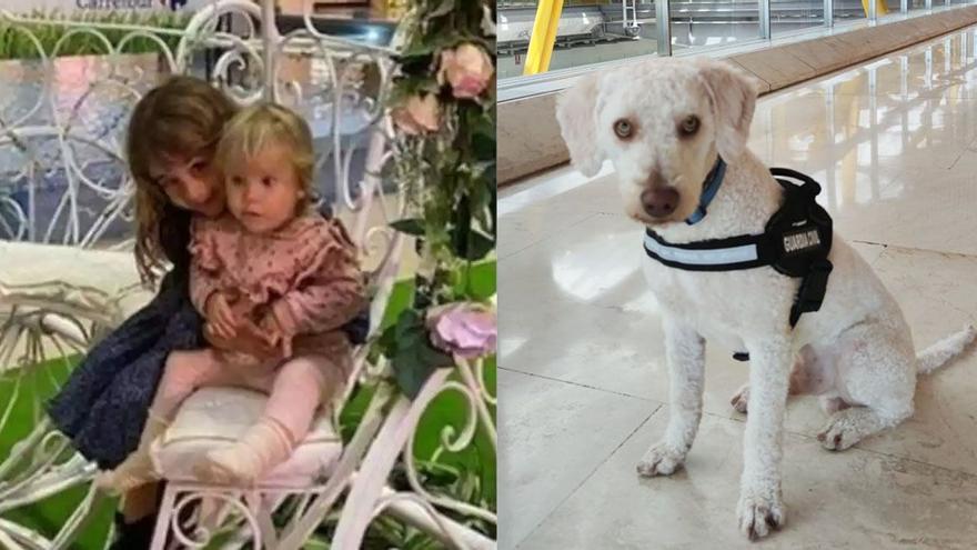 Así es Junco, el perro de la Guardia Civil que busca a las niñas de Tenerife