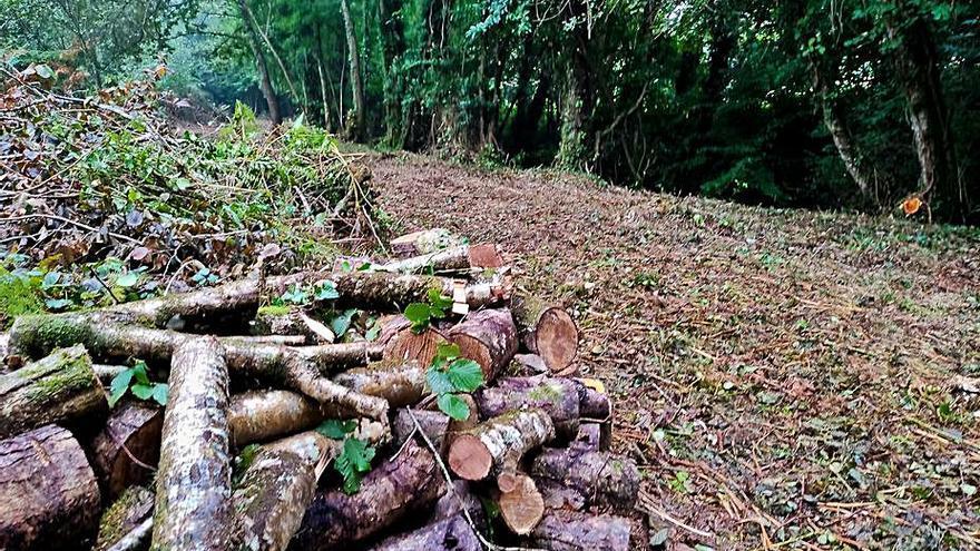 Augas abre expediente sancionador a Oza-Cesuras por la tala y desbroce sin permiso a orillas del Mendo