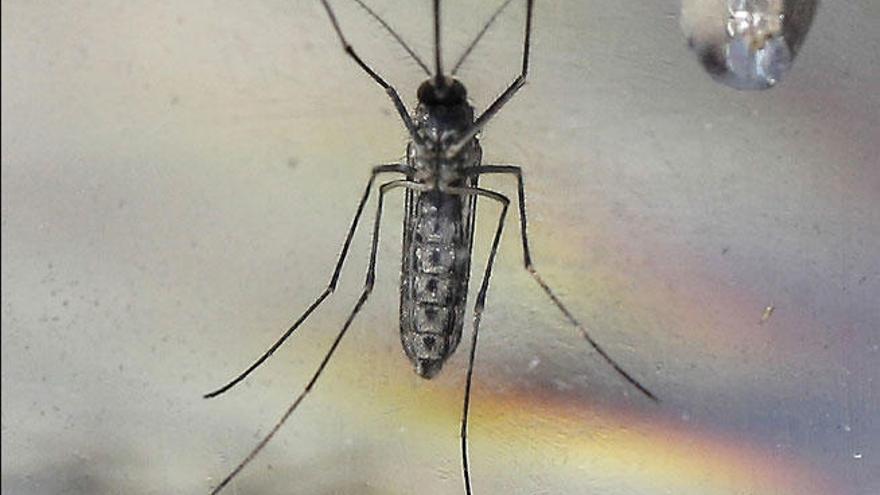 El síndrome Guillain-Barré, otro mal relacionado con el Zika