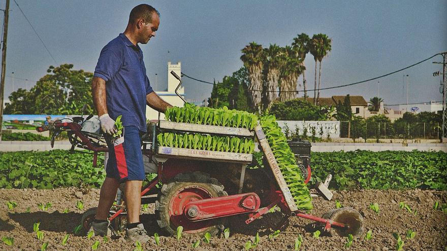 Los agricultores valencianos menores de 40 años solo cobran el 10% de la PAC