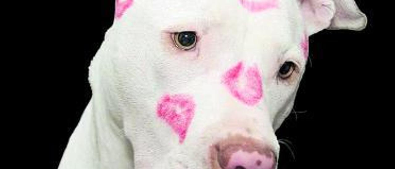 Un perro en una imagen de archivo.