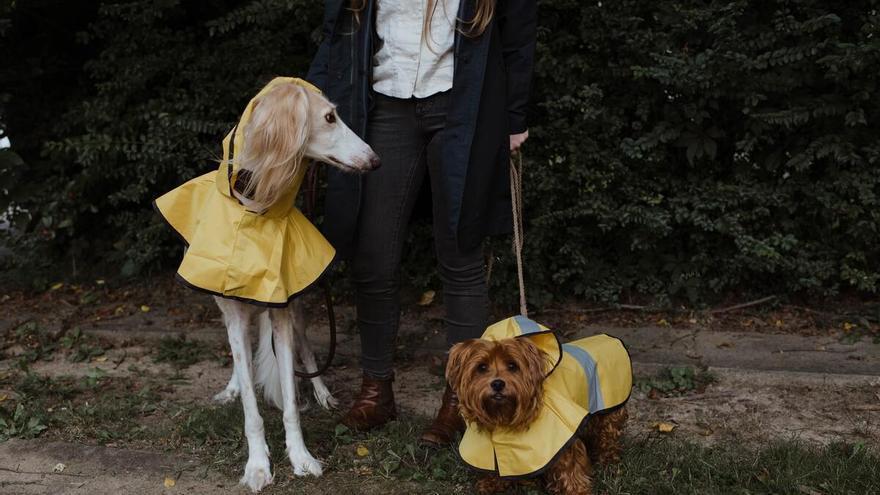 Los mejores chubasqueros para resguardar a tu perro de la lluvia al mejor precio