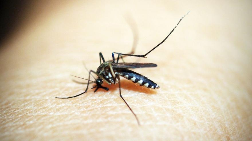 Las picaduras de mosquitos se dejan notar en Castellón