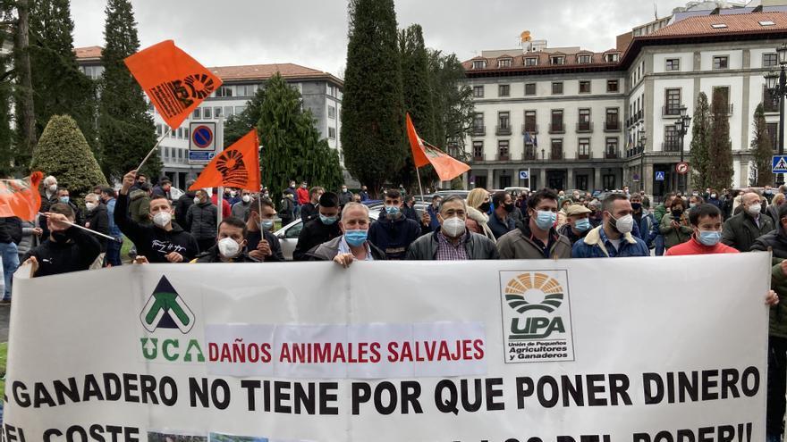 """Los ganaderos claman en Oviedo contra el blindaje del lobo:  """"Cada año pierdo la mitad de mi rebaño"""", lamenta una ganadera de Sotres"""