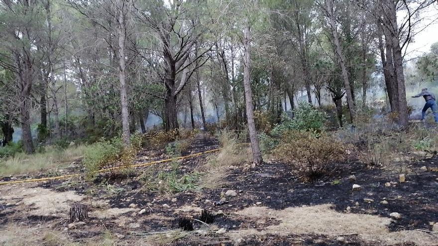 Desalojan a 38 personas tras desatarse un incendio forestal en Alcúdia
