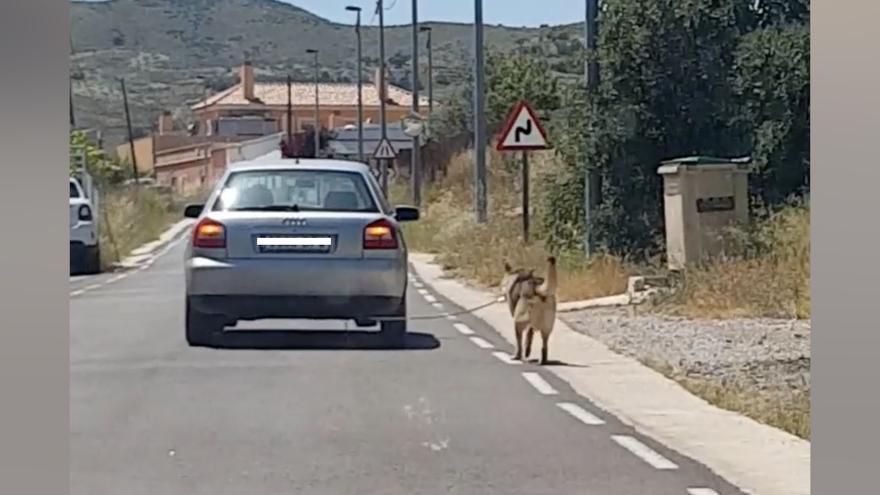 Maltrato animal: ata a un perro al coche y se pasea por las calles