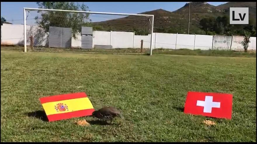 La última predicción de Tako: España ganará a Suiza